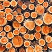 تصفیه آب در صنعتی چوب و کاغذ